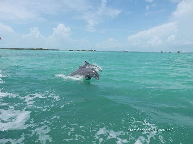 Dolphin in Miami